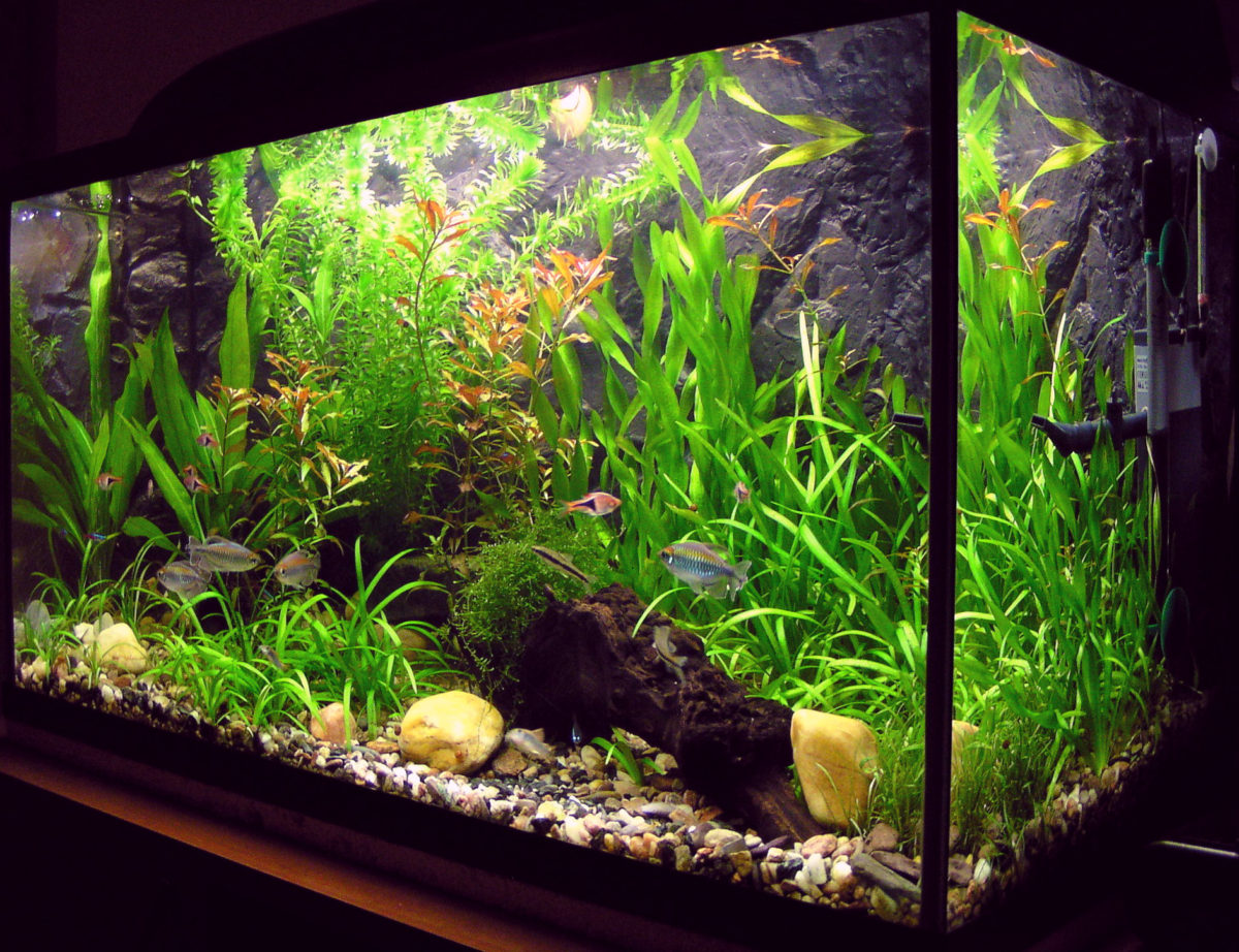 熱帯魚を飼うためのアクア入門
