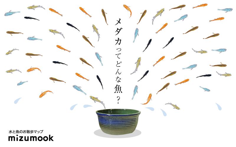メダカの生息地は?日本固有種?絶滅危惧種?種類は?