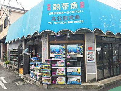 高松観賞魚1