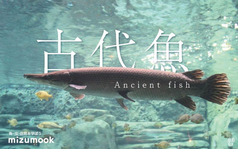 驚愕!生きた化石、古代魚の凄いところ。