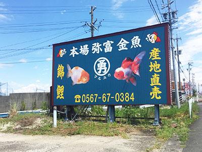 愛知県弥富市丸勇養魚場