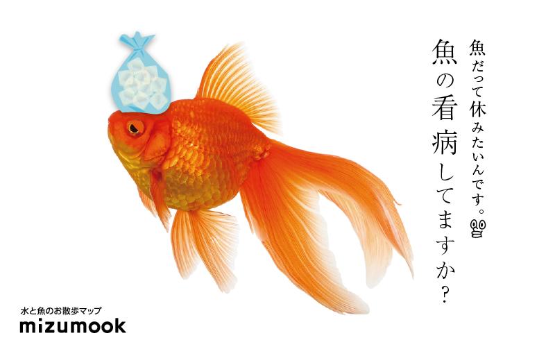 すぐに対策を!9つの魚の病気と治療法!