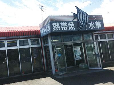 愛知県弥富市やとみフィッシュ