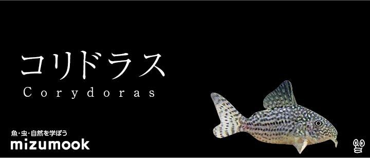 コリドラス