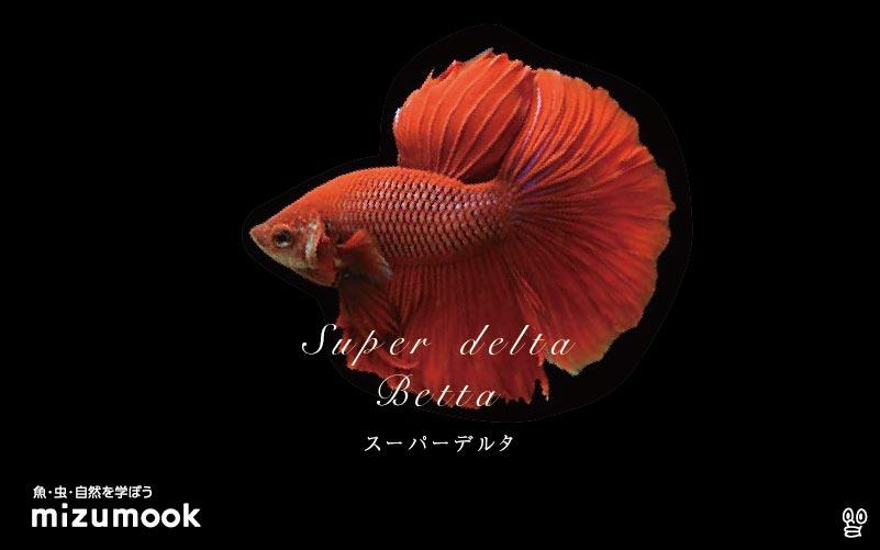 スーパーデルタベタの飼育/混泳・繁殖・病気・種類