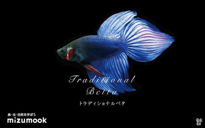 anabas-traditional-betta