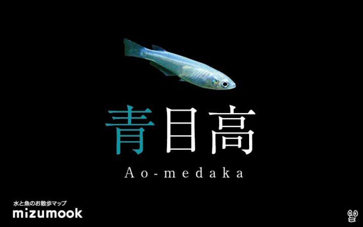 ao-medaka