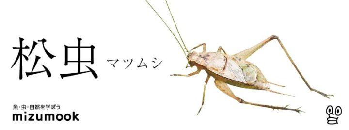 autumn-bug-matsu-musi