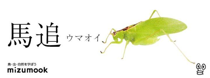 autumn-bug-uma-oi