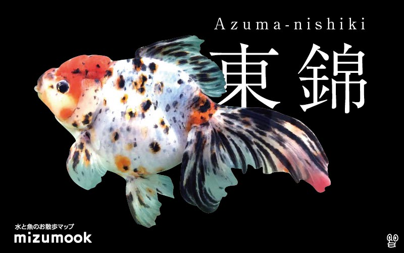 東錦の飼い方/金魚・飼育・えさ・病気・種類