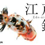 江戸錦の飼い方/金魚・飼育・えさ・病気・種類