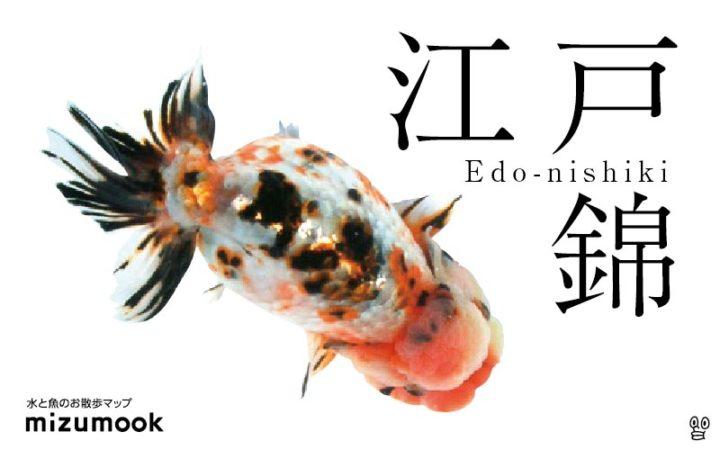 goldfish-edonishiki