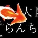 大阪らんちゅうの飼い方/金魚・飼育・えさ・病気・種類