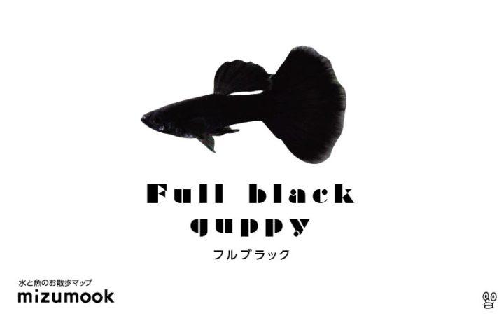 guppy-full-black