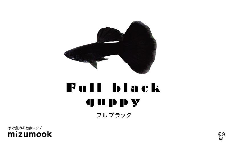 フルブラックグッピーの飼育/混泳・繁殖・病気・種類