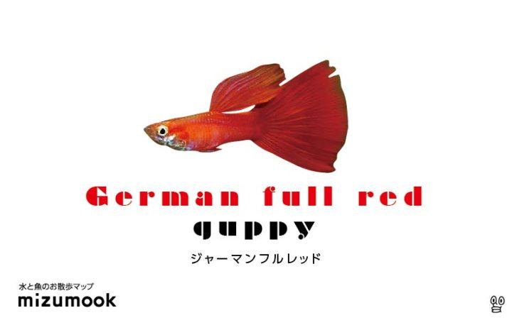 guppy-german-full-red