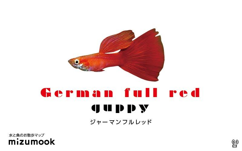 ジャーマンフルレッドグッピーの飼育/混泳・繁殖・病気・種類