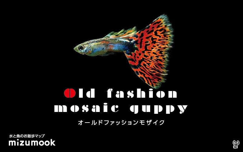 オールドファッションモザイクグッピーの飼育/混泳・繁殖・病気・種類