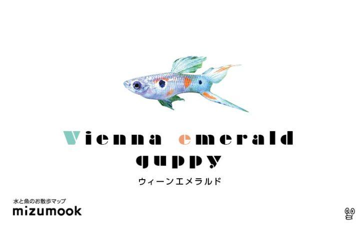 guppy-vienna-emerald