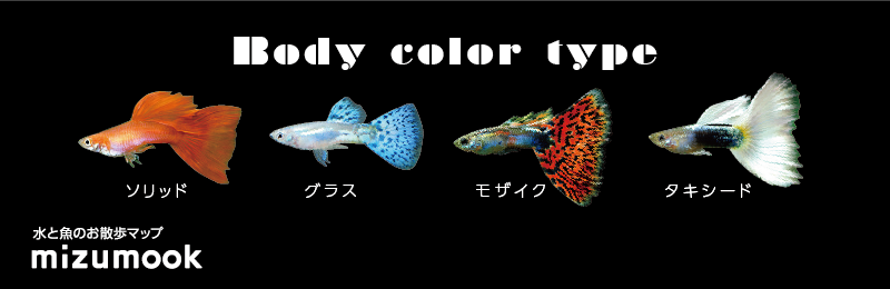 guppy_bodycolor_type_1