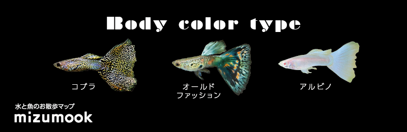 guppy_bodycolor_type_2