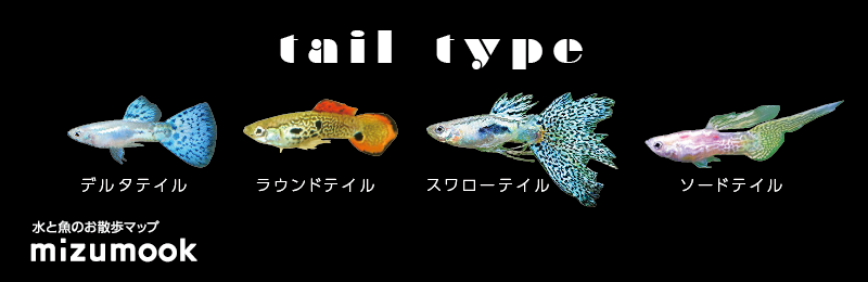 guppy_tail_type_1