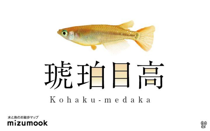 kohaku-medaka