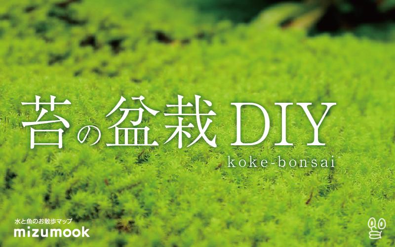 苔リウム?苔盆栽?苔のオブジェDIYしました。