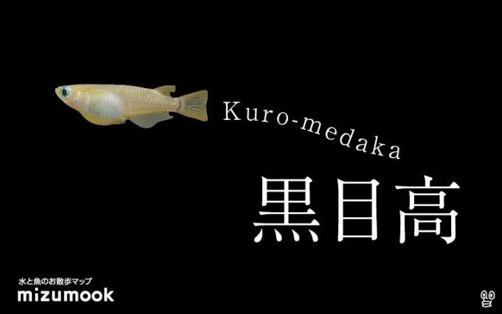 kuro-medaka