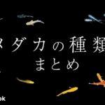 日本のメダカ9種/飼い方・飼育・繁殖・病気