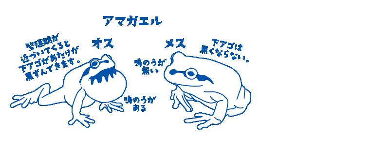 osu_mesu-03
