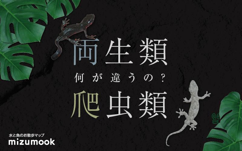 進化して海から出た両生類・爬虫類簡単なイモリとヤモリの見分け方