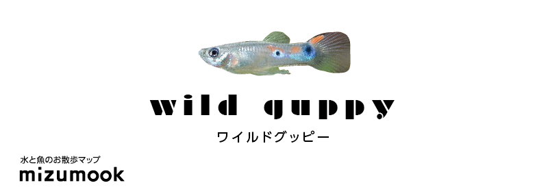 wildguppy-02