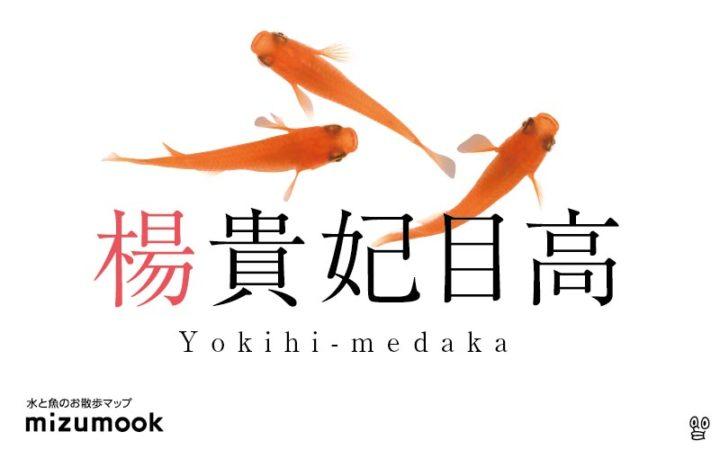 yokihi-medaka