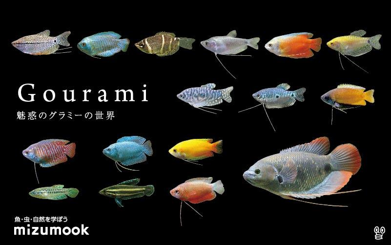 グラミーと名のつく熱帯魚の種類/全18種類