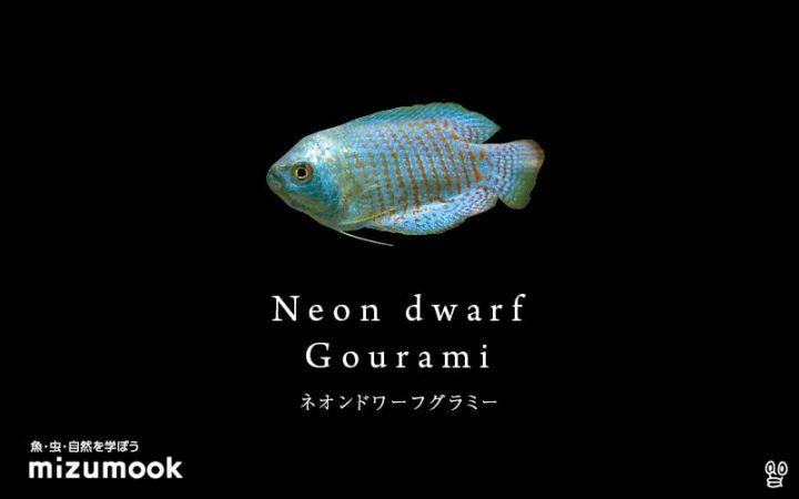 anabas-neon-dwarf-gourami