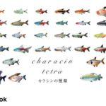 カラシン・テトラの仲間/全40種類