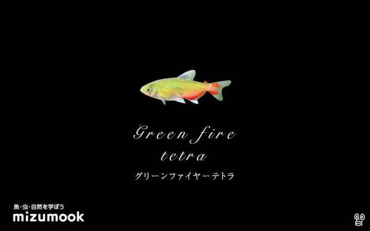 characin_green-fire-tetra