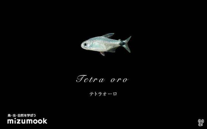 characin_tetra-oro