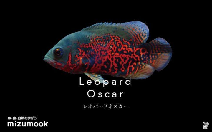 cichlid_leopard-oscar