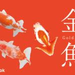 金魚の品種をご紹介/全15品種