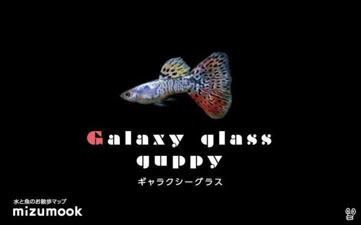 guppy-galaxy-glass