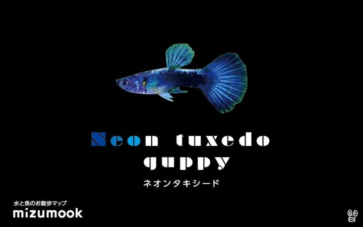guppy-neon-tuxedo