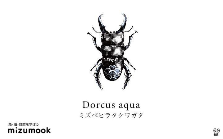 stag-beetle-dorcus-aqua