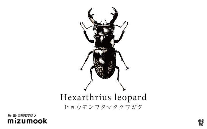 stag-beetle-hexarthrius-leopard