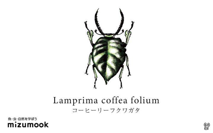 stag-beetle-lamprima-coffea-folium