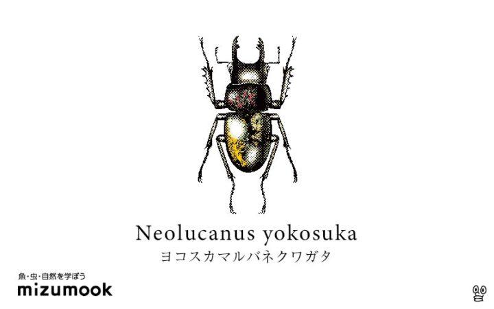 stag-beetle-neolucanus-yokosuka