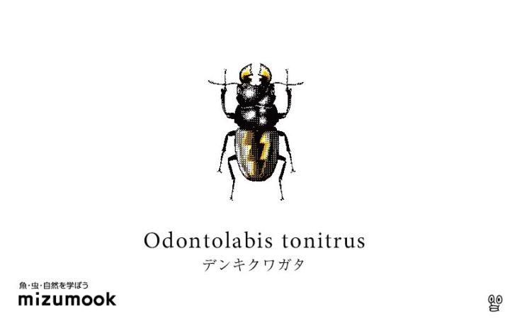stag-beetle_odontolabis-tonitrus