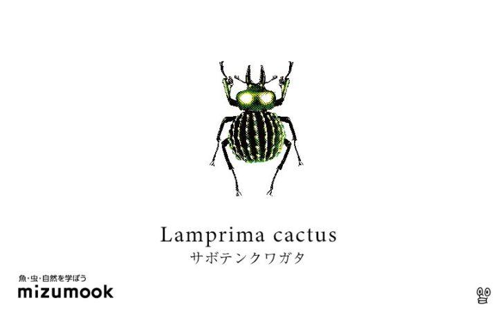 stag-beetle-2-lamprima-cactus