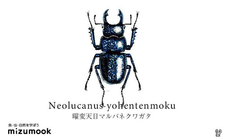 stag-beetle-2-neolucanus-yohentenmoku
